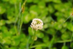 Gräsplan är färgen av våren arkivfoton