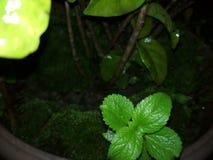 Gräsplan är förälskelse royaltyfri foto