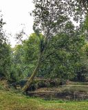 Gräsplan överbryggar Fotografering för Bildbyråer