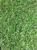 Gräsplan Royaltyfri Bild