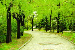 Gräsplan Arkivfoton