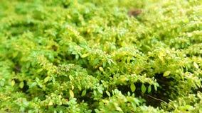 Gräsplan Royaltyfria Foton
