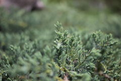 Gräsplan Fotografering för Bildbyråer