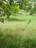 Gräsplan arbeta i trädgården beautifully Royaltyfri Foto
