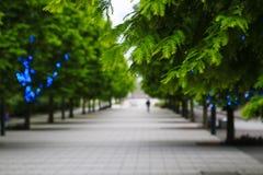 Gräsplan av raden av trädgatan Royaltyfri Bild