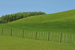 Gräsplan betar Royaltyfri Bild