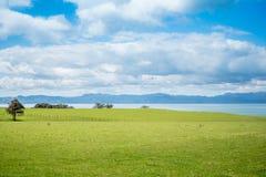 Gräsplan betar att förbise havet och coromandelhalvön royaltyfria bilder