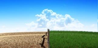 Gräsplan betar med staketet royaltyfri fotografi
