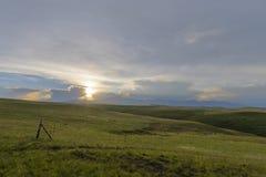 Gräsplan betar på solnedgången royaltyfri foto