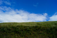 Gräsplan blå himmel, prärie Royaltyfri Bild