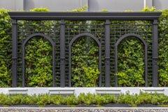 Gräsplan fäktar väggar Gröna träd smyckar väggarna och de mönstrade staketen arkivbild