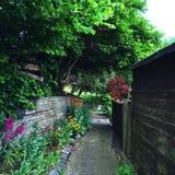 Gräsplan färg av avund Royaltyfria Foton