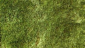 Gräsplan färgad matttygtextur Royaltyfria Bilder
