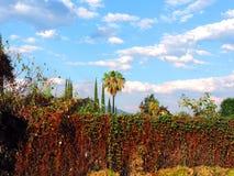 Gräsplan för enviorement för naturcielohimmel blå Fotografering för Bildbyråer