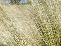 Gräsplan för gräsnärbildtextur royaltyfria bilder
