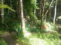 Gräsplan för natur n Arkivbilder