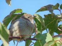 Gräsplan för träd för fågelsommarnatur Arkivbild