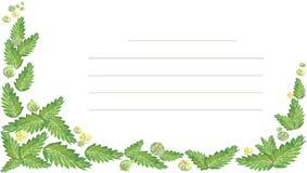 Gräsplan för vattenfärgmintkaramellbär Royaltyfri Bild