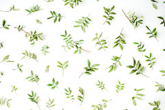 Gräsplan förgrena sig på vit bakgrund Royaltyfria Foton