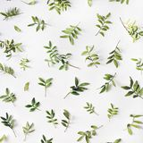 Gräsplan förgrena sig på vit bakgrund Royaltyfri Bild