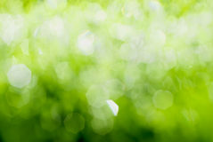 Gräsplan fjädrar bakgrund royaltyfri bild