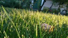 Gräsplan-foder i trädgården Arkivfoton