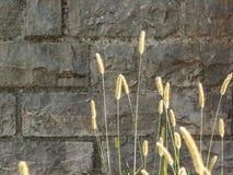 Gräsplan gå i ax Fotografering för Bildbyråer