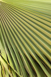 Gräsplan gömma i handflatan leafen texturerar Arkivfoton