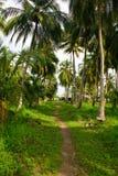 Gräsplan gömma i handflatan skogen i den colombianska ön Mucura fotografering för bildbyråer