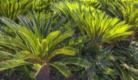 Gräsplan gömma i handflatan trädgårds- landskapdesign i stranden parkerar antalya kalkon Arkivfoto