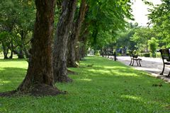 Gräsplan gaden och stora träd Arkivbild