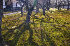 Gräsplan graden i den Tofukuji templet Royaltyfri Fotografi