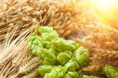 Gräsplan hoppar, malt, öron av korn och vete royaltyfria foton