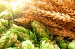 Gräsplan hoppar, malt, öron av korn och vetekorn royaltyfri foto