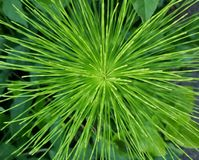 Gräsplan hypnotiserar Royaltyfri Fotografi