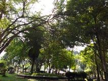 Gräsplan i parkera arkivbilder