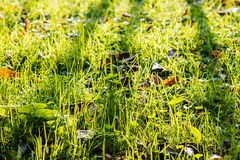 Gräsplan i tidig sortvinter Arkivfoto
