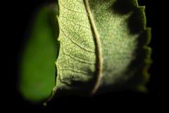 Gräsplan isolerat buktat blad arkivbild