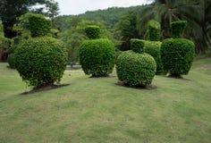 Gräsplan klippt buske Royaltyfri Bild