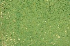Gräsplan knäckt stuckaturväggtextur Royaltyfria Bilder