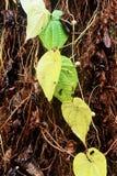 Gräsplan lämnar Royaltyfri Foto