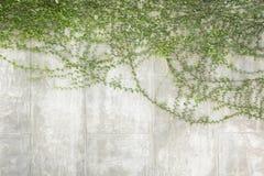 Gräsplan lämnar Arkivbilder