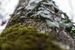 Gräsplan lämnar att växa upp ett träd i nedgång Arkivfoton