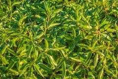 Gräsplan lämnar bakgrund Arkivfoton