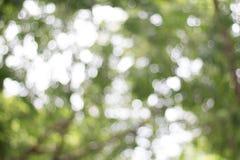Gräsplan lämnar bakgrund, den tropiska skogväxten royaltyfri foto