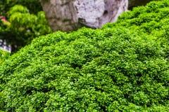 Gräsplan lämnar bakgrund, nytt grönt blad Royaltyfria Foton