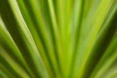 Gräsplan lämnar closeupen Royaltyfri Foto