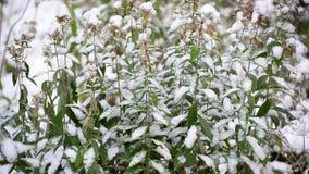 Gräsplan lämnar doldt med snow arkivfilmer