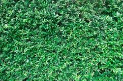 Gräsplan lämnar för att texturera Fotografering för Bildbyråer