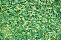 Gräsplan lämnar för att texturera Royaltyfri Foto